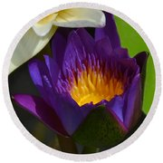 Just Opening Purple Waterlily -  Square Round Beach Towel