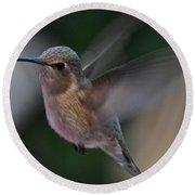 Juvenile Anna's Hummingbird Landing On Perch Round Beach Towel