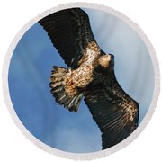 Juvenile Bald Eagle Two Round Beach Towel