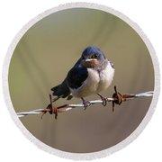 Juvenile Barn Swallow Landscape Round Beach Towel