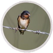 Juvenile Barn Swallow Round Beach Towel