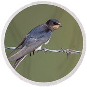 Juvenile Barn Swallow Side On Round Beach Towel