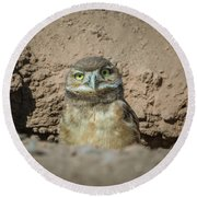 Juvenile Burrowing Owl-img_164817 Round Beach Towel