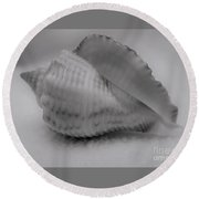 Juvenile Conch  Round Beach Towel