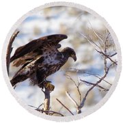 Juvenile Eagle Taking Off   Round Beach Towel