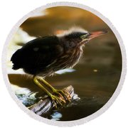 Juvenile Green Heron Round Beach Towel