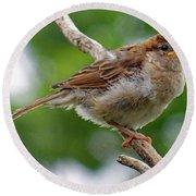 Juvenile House Sparrow Round Beach Towel