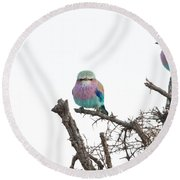 Juvenile Lilac Breasted Roller Round Beach Towel