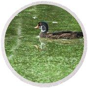 Juvenile Male Wood Duck Round Beach Towel