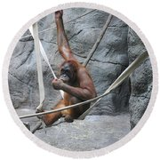Juvenile Orangutan Round Beach Towel