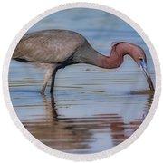 Juvenile Reddish Egret Round Beach Towel