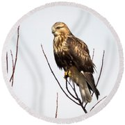 Juvenile Rough-legged Hawk  Round Beach Towel