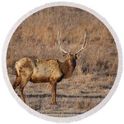 Kansas Elk Round Beach Towel