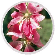 Kashmir Tree Mallow  Round Beach Towel