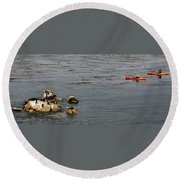 Kayakers And Seal Lions Round Beach Towel