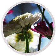 Keeping In The Sunlight... Round Beach Towel