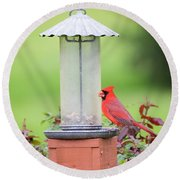 Kentucky Cardinal  Round Beach Towel