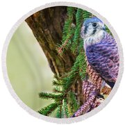 Kestrel On The Cones Round Beach Towel