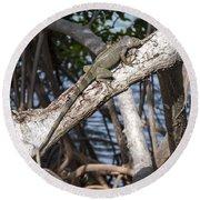 Key West Iguana In Mangrove 3 Round Beach Towel