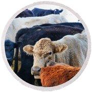 Kibler Valley Cows Round Beach Towel