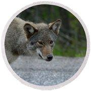 Killarney Coyote Round Beach Towel