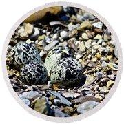 Killdeer Nest Round Beach Towel