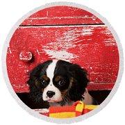 King Charles Cavalier Puppy  Round Beach Towel