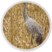 King Of The Delta Cornfield Round Beach Towel
