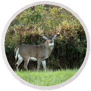King Of The Forest Round Beach Towel