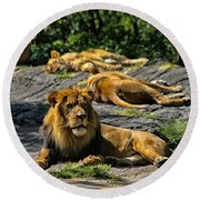 King Of The Pride Round Beach Towel