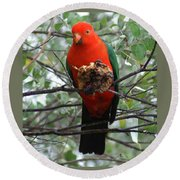 King Parrot Round Beach Towel