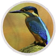 Kingfisher Perch Round Beach Towel