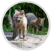 Kit Fox12 Round Beach Towel