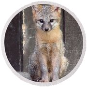 Kit Fox15 Round Beach Towel