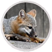 Kit Fox3 Round Beach Towel