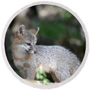 Kit Fox7 Round Beach Towel