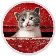 Kitten In Red Drawer Round Beach Towel by Garry Gay