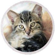 Kitten Looking Round Beach Towel