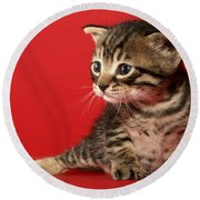Kitten On Red Round Beach Towel