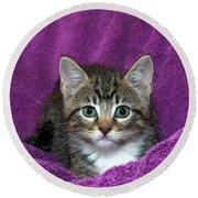 Kitten, Purr-fect In Purple Round Beach Towel