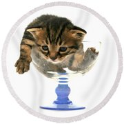 Kitten Sits In A Glass  Round Beach Towel