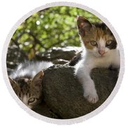Kittens On A Wall Round Beach Towel