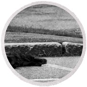 Kitty In The Street Black And White Round Beach Towel
