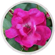 Knockout Rose Surrounded By Buds Round Beach Towel