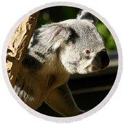 Koala Bear 2 Round Beach Towel