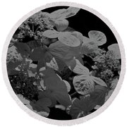 Lace Cap Hydrangea In Black And White Round Beach Towel