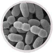 Lactobacillus Sakei, Sem Round Beach Towel