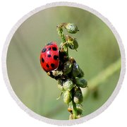 Lady Beetle Round Beach Towel