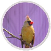 Rare Yellow Cardinal On A Cherry Branch Round Beach Towel