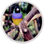 Lady Gouldian Finch Round Beach Towel